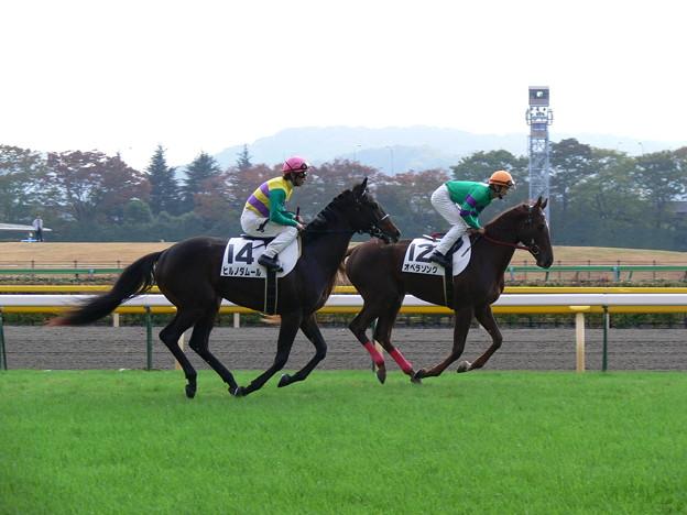 2009年11月14日 東京6R 新馬 ヒルノダムール
