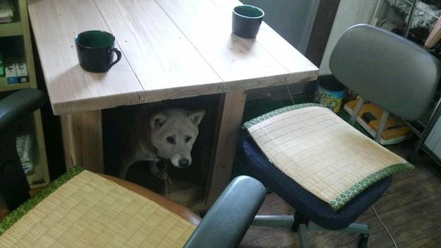つた吉の家 兼 テーブル