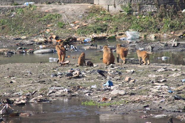 バグマテイ川