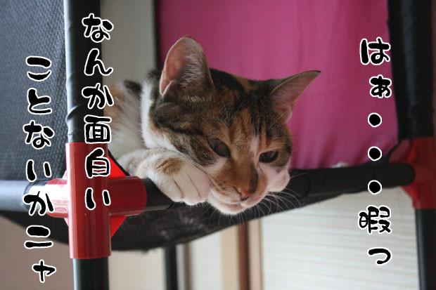Photos: 2010062701