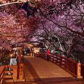 夜の桜雲橋。