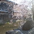 写真: 祇園白川