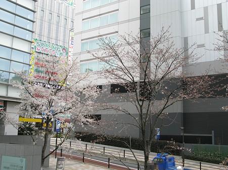 2010.03.28 秋葉原 桜(1/3)