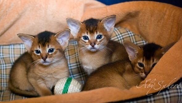 kitten1026