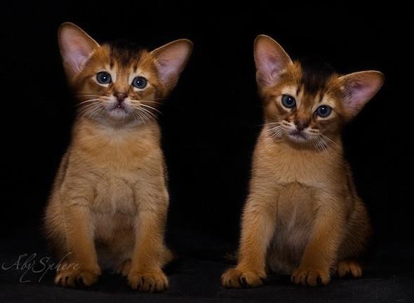 kitten1026_15