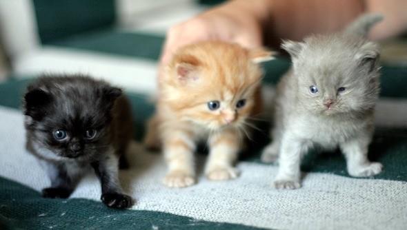 kitten1044_10