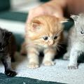 Photos: kitten1044_10