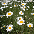 Photos: flower_AND_Bug05242011dp1-03