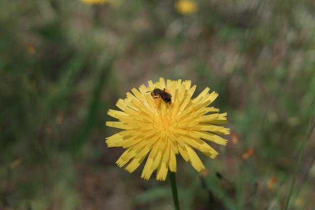 Photos: Flower_and_bug05252011dp2-03