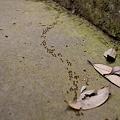 Photos: 蟻の行列。。。