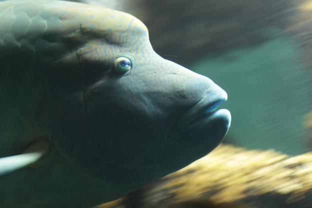 大きな魚の流し撮り
