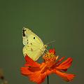 Photos: 蝶の日3