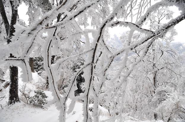 雨氷に樹氷?2