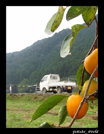 軽トラのある風景 ~柿の木の向こうに~