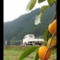 Photos: 軽トラのある風景 ~柿の木の向こうに~