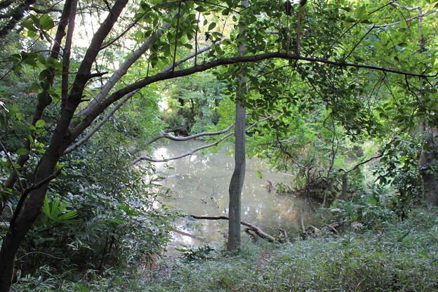 灰ヶ久保の新池