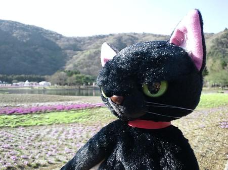 芝桜を臨む@富士芝桜まつり2011