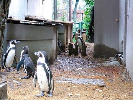 20110522 天王寺 路地裏ペンギン02