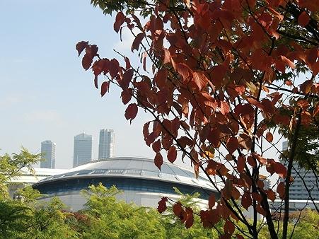 紅葉と大阪プール