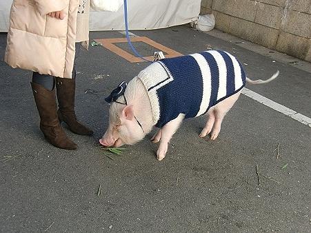 豚さんー1