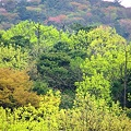 Photos: 深坂自然の森公園