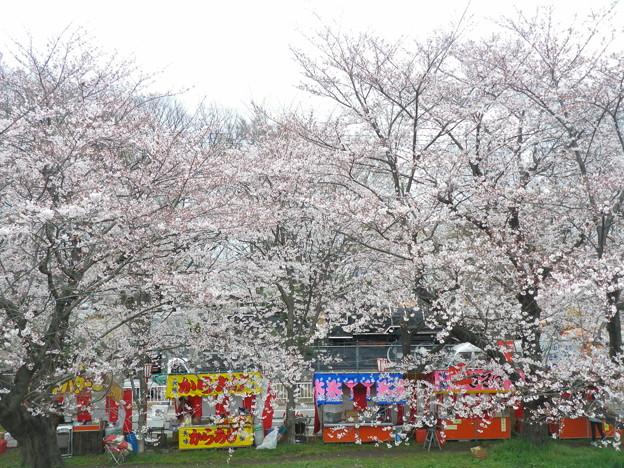 2010_04_07_熊谷桜堤-2