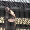 お猿さんたちはすばしこい