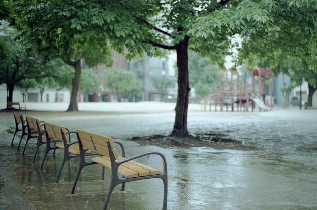 Photos: 雨の公園