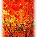 写真: 奥鬼怒スーパー林道の紅葉