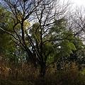写真: 20110116_132526