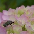 花粉を求めて・・・