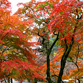 Photos: 長谷の紅葉12