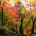 Photos: 長谷の紅葉13