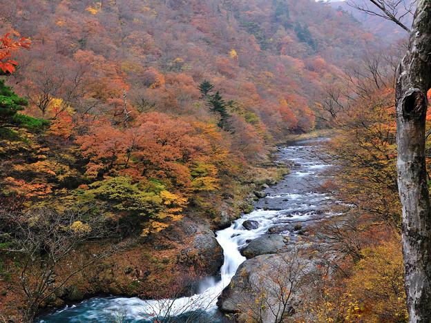 秋彩の塩原渓谷
