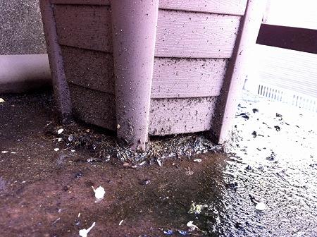 水の気配を感じたのか、鉢の底から根が出てる。。だからか、1日部屋を空けたらヘ