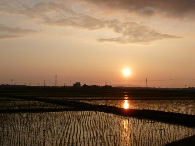 田んぼと夕陽