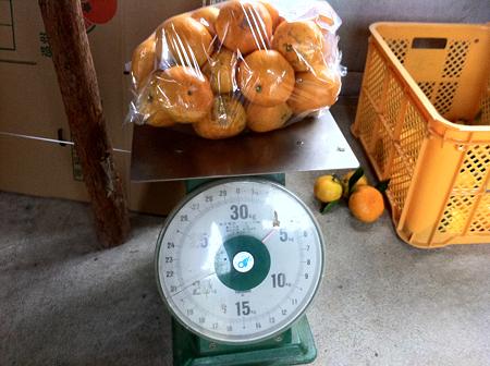 4kgのみかん
