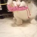 写真: 猫に新しいおもちゃをあげた...