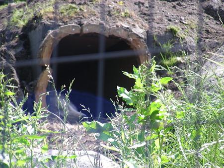オオカミは穴の中でお休み中