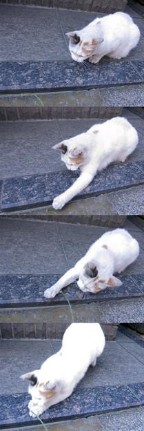 猫の一本釣り