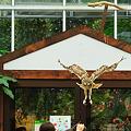 神戸花鳥園のフクロウの写真です。