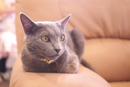 上野 猫まるカフェ エレノア2