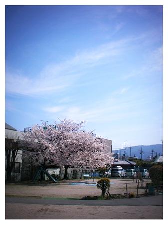 桜2010_01