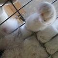 ケージの上の猫2