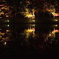 東公園の紅葉ライトアップ