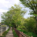 Photos: 多摩川上水沿い