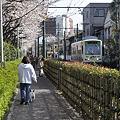 写真: 都電荒川線の春201004_DSC7039