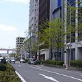 京町筋 新緑_01
