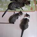 Photos: oyatsu04