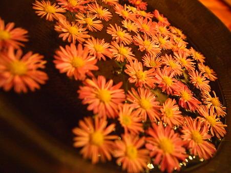 花が浮かぶ